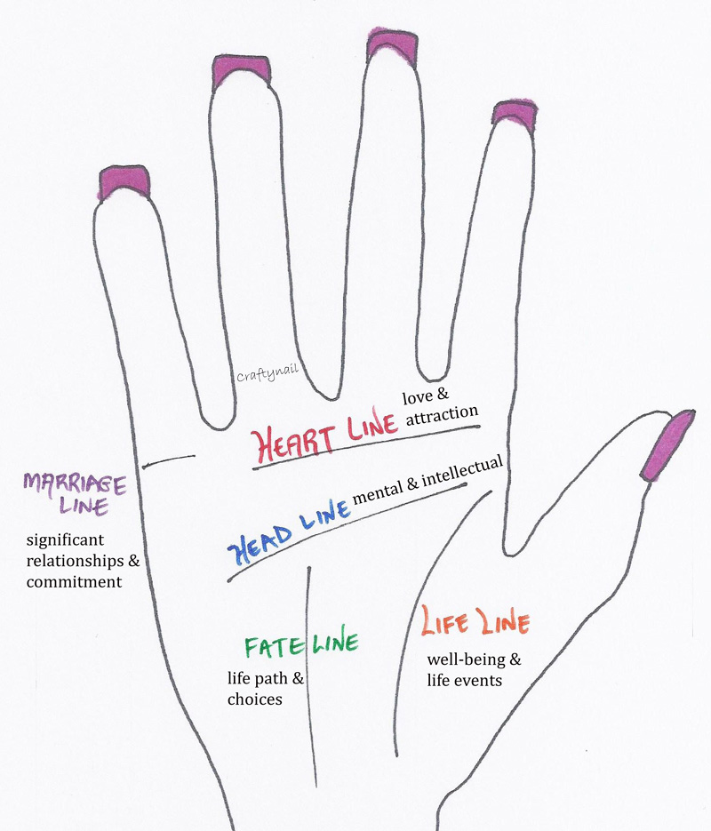 WHAT ARE THE MAIN LINES ON OUR PALMS? Here's a handy dandy sketch I